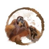 Calendario Imperator 2018  - Orango