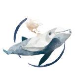 Calendario Imperator 2018 - Vaquita