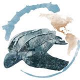 Calendario Imperator 2018 - Tartaruga Liuto