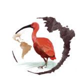 Calendario Imperator 2018  - Ibis rosso